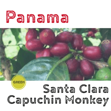 Panama Santa Clara Capuchin Monkey Washed (green)-0
